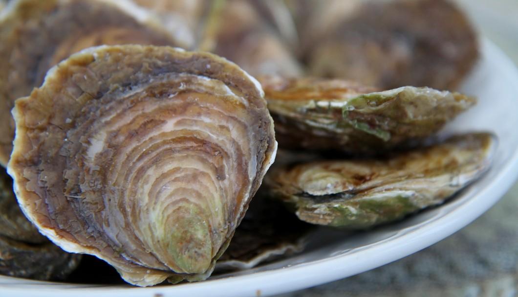 Belon Austern